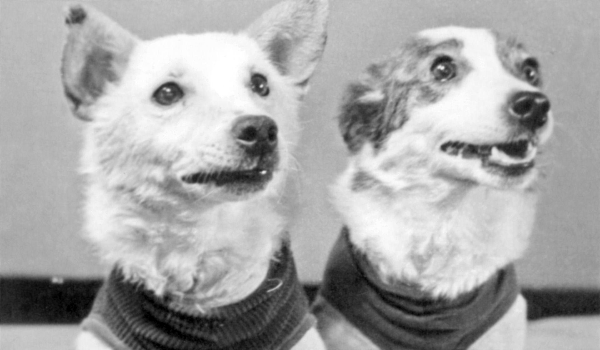 фото собак белка и стрелка